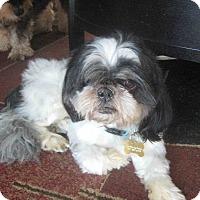 Adopt A Pet :: Usher - Playa Del Rey, CA
