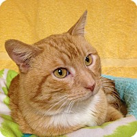 Adopt A Pet :: Garfield - Foothill Ranch, CA