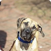 Adopt A Pet :: Malea - Reisterstown, MD