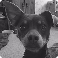 Adopt A Pet :: Max - Carey, OH