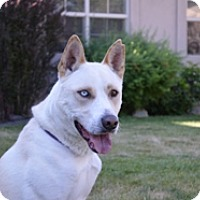 Adopt A Pet :: Diesel - Portola, CA