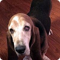 Adopt A Pet :: CHUCK - ADOPTION PENDING! - Pennsville, NJ