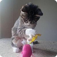 Adopt A Pet :: Rascal - Lenexa, KS