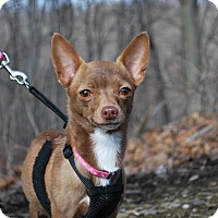 Adopt A Pet :: Fawn - New Castle, PA