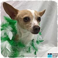 Adopt A Pet :: Veronica - Grants Pass, OR