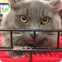 Adopt A Pet :: ROGER - Lakewood, CA