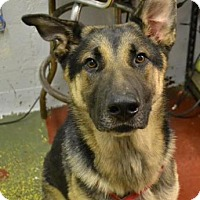 Adopt A Pet :: Chase - Chester Springs, PA