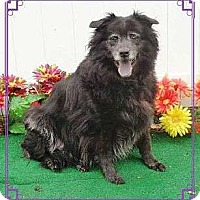 Adopt A Pet :: Baby - Sudbury, MA