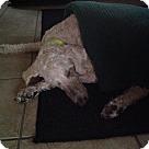 Adopt A Pet :: Sinclair