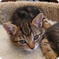 Adopt A Pet :: Shelia MC8378 - Burlington, WA