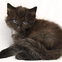 Adopt A Pet :: Vancouver - Dearborn, MI