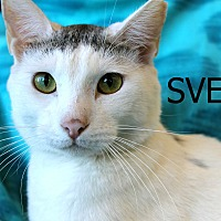 Adopt A Pet :: Sven - Wichita Falls, TX