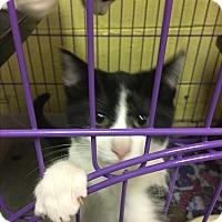 Adopt A Pet :: Pongo - Richboro, PA