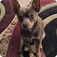 Adopt A Pet :: Kobe - Woodinville, WA