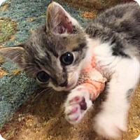 Adopt A Pet :: Vincent - Austin, TX