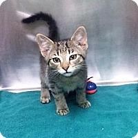 Adopt A Pet :: Justin - Port Clinton, OH