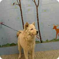 Adopt A Pet :: URGENT ON 1/26  San Bernardino - San Bernardino, CA