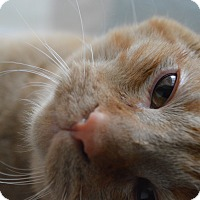 Adopt A Pet :: Logan - St. Charles, MO