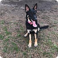 Adopt A Pet :: Xena (Adoption pending) - Morrisville, NC