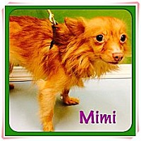 Adopt A Pet :: Mimi - Los Angeles, CA