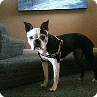 Adopt A Pet :: Shasha - Hilliard, OH