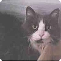 Adopt A Pet :: Samantha - Lunenburg, MA