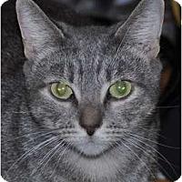 Adopt A Pet :: Kate - Atlanta, GA