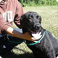 Adopt A Pet :: # 207-12 - ADOPTED! - Zanesville, OH