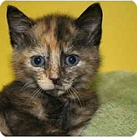 Adopt A Pet :: TIFFANY - SILVER SPRING, MD