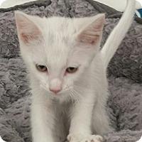 Adopt A Pet :: BBButtler - North Highlands, CA