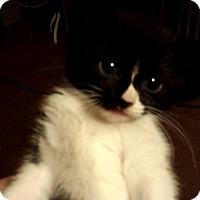 Adopt A Pet :: Drizzle - Putnam, CT