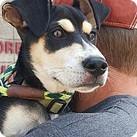 Adopt A Pet :: Jimmy  James - Uxbridge, MA