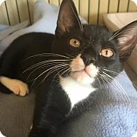 Adopt A Pet :: Ed - Island Park, NY