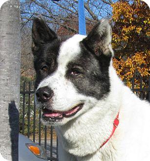 Dog Rescue Overland Park Ks