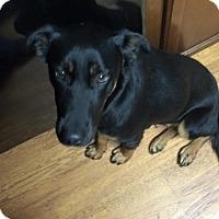 Adopt A Pet :: Waverly (Cat Friendly) - Greeneville, TN