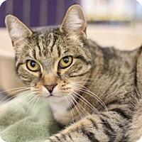 Adopt A Pet :: Mally - Sacramento, CA