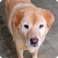 Adopt A Pet :: Sonny - Memphis, TN