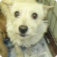 Adopt A Pet :: Rosie - Yucaipa, CA