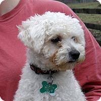 Adopt A Pet :: WENDY - so sweet - Stamford, CT