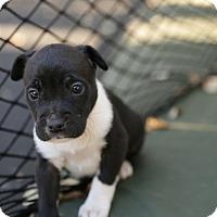 Adopt A Pet :: Basalt - San Antonio, TX