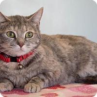 Adopt A Pet :: Emmie $75 - Seneca, SC