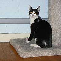 Adopt A Pet :: Roman - VIDEO!! - Ephrata, PA