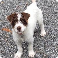 Adopt A Pet :: Josie - Atlanta, GA