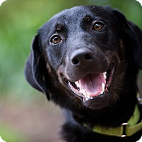 Adopt A Pet :: Cole - Houston, TX