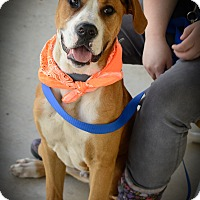 Boxer Mix Dog for adoption in Muldrow, Oklahoma - Jetsum