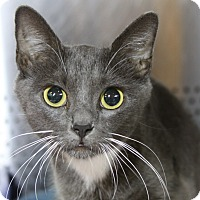 Adopt A Pet :: Xandria - Sarasota, FL