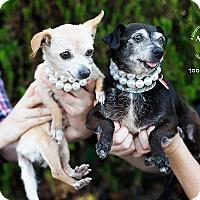 Adopt A Pet :: Mini and Tootsie - Los Angeles, CA