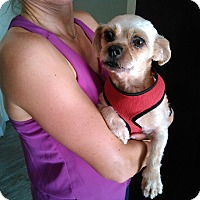 Adopt A Pet :: Julie - Naples, FL