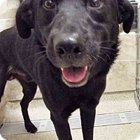 Adopt A Pet :: ADOPTED!!!   Shadow - Plainfield, IL