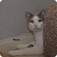 Adopt A Pet :: Mario - Independence, MO